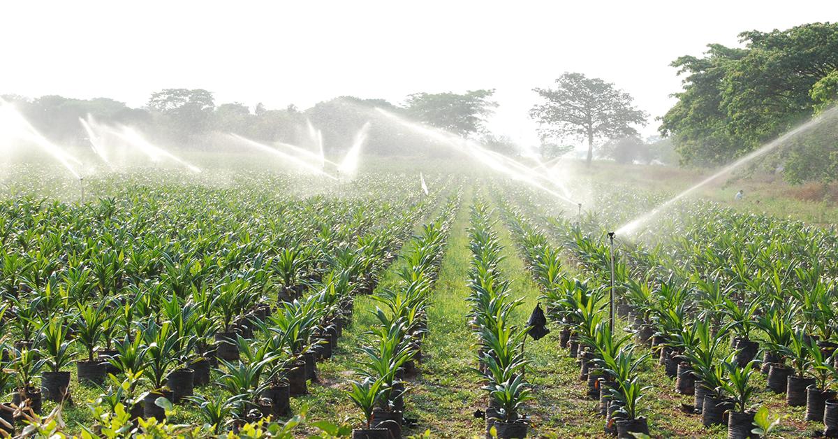 Se han pre aprobado siete nuevos proyectos para garantizar 1.100 hectáreas más de siembra de diferentes cultivos por más de 5.200 millones de pesos