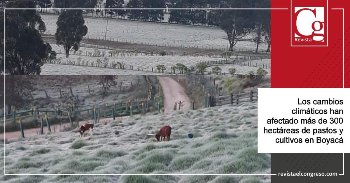 Alerta-por-bajas-temperaturas-que-han-afectado-la-agricultura-en-Boyacá.