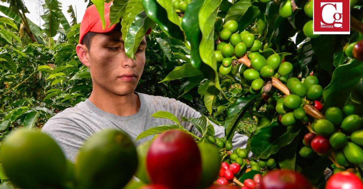 Nueva maquinaria para sector cafetero llegará al Huila
