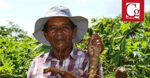Comisión Quinta desarrolló Audiencia Pública virtual sobre la crisis que viven los productores de papa y yuca en el país