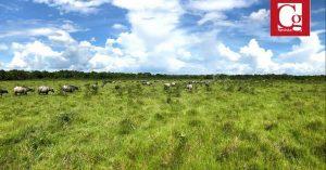 La RAP Llanos, a un paso para ser una realidad de participación regional