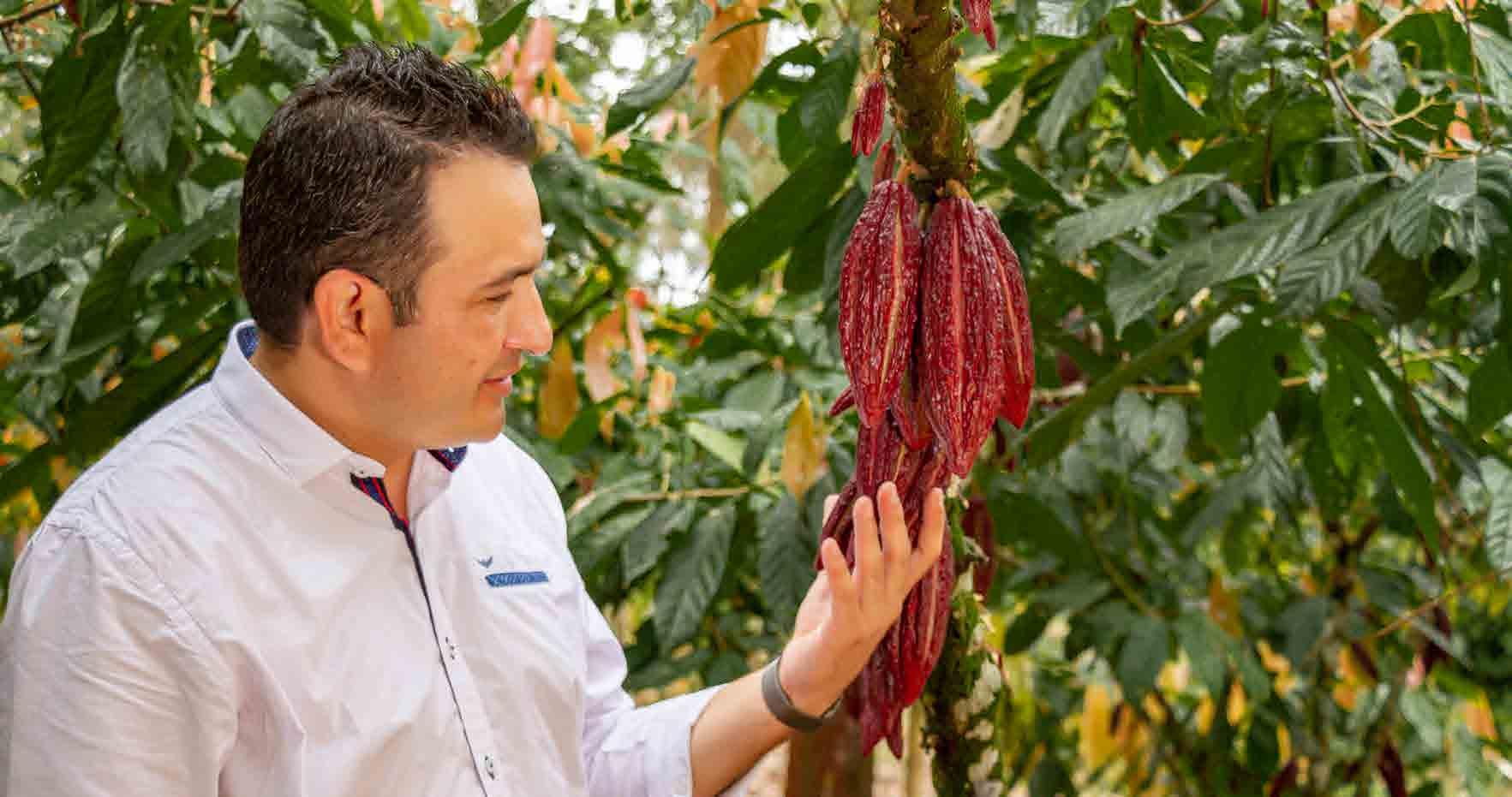 Arauquita espera consolidarse como el epicentro cacaotero de Colombia.