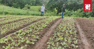 El sector rural del Cauca avanza con extensión agropecuaria