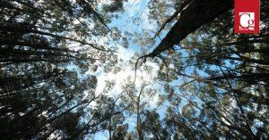 Bosque La Esperanza, un homenaje a las víctimas del COVID-19